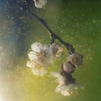 Poesie Contadine: Pioggia d'Aprile