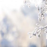 Poesie Contadine: Neve