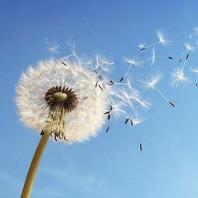 Poesie Contadine: E' il vento